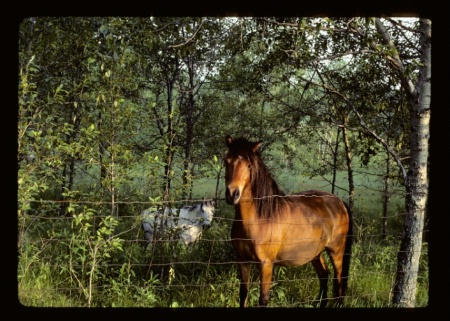 Horses #2