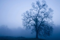 Blue Tree, Early Morning