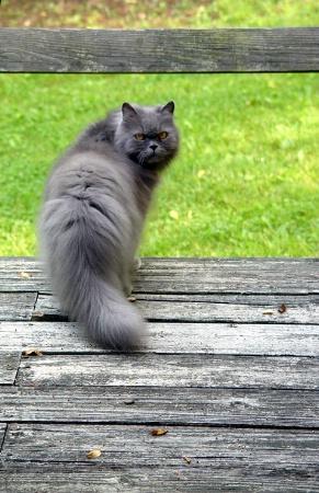 That Cat*