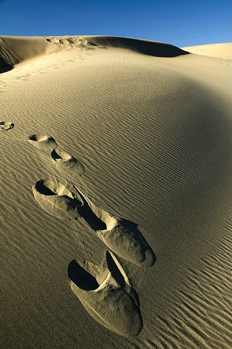 Footsteps in wilderness