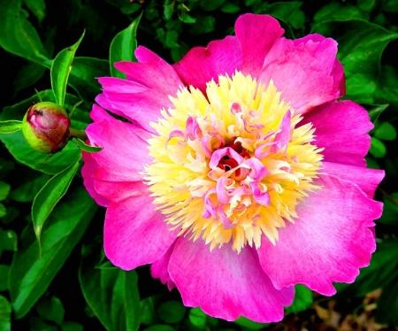 Fantastic Flower*