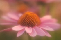 how to use a Lensbaby