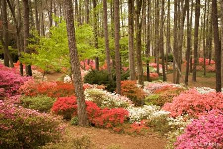 Theme: Callaway Gardens-Pine Mtn., Georgia; Shot i