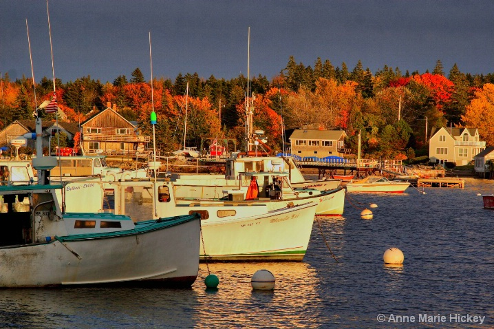 Maine Harbor
