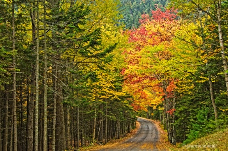 Acadia National Park Roadway