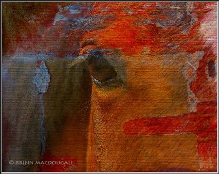 Horse on Wood