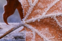 Winter's Touc...