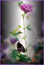 Swallowtail & Blo...