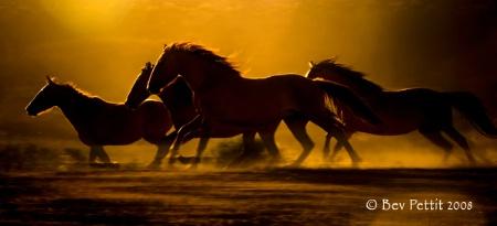 Running Mustangs