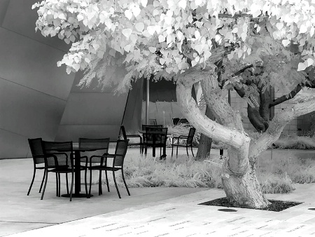 Courtyard Tree and Tables