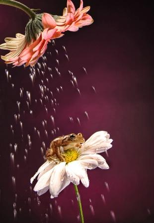 a summer rain