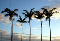 Five Palms over M...