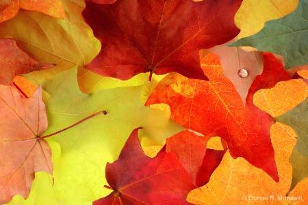 October pattern