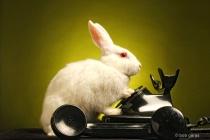 bunny talk