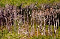 WATERTON COPSE