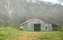 Barn by a Sycamore