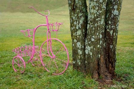 Bike and Trees