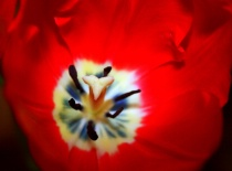 Alien or Tulip?