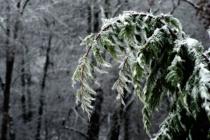 Winter's Burd...