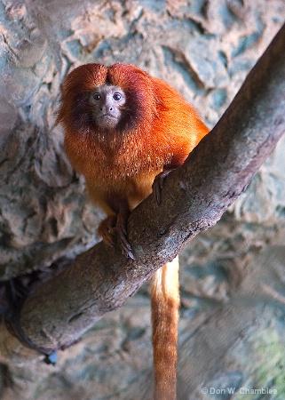 Aquarium Monkey