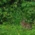 © Frieda Weise PhotoID # 10405724: Bunny