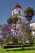 Mission Bells and a Jacaranda
