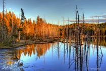Yellowstone Reflections