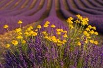 Provence Pleasure