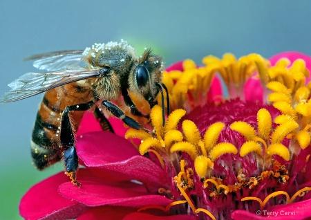 Little Pollenator