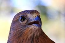 Fantastic Falcon
