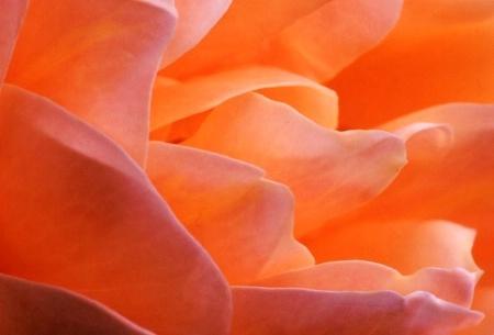 {nside the Flower