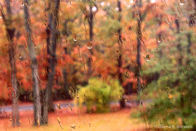 Autumn oaks on a rainy day