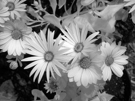 Brilliant Bouquet