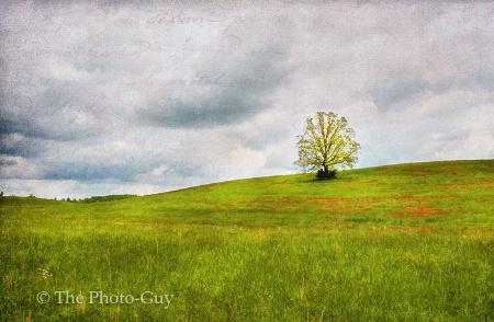 """Datha's Lone Tree"""