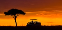 Sunset Safari