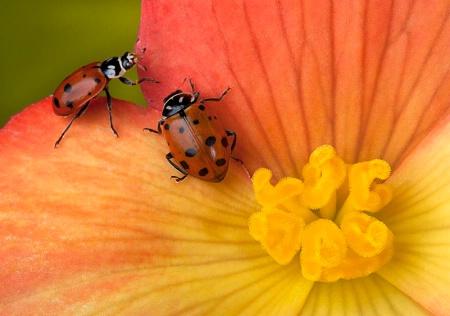 Gardener's Friends