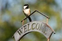 Every Birdie Welc...