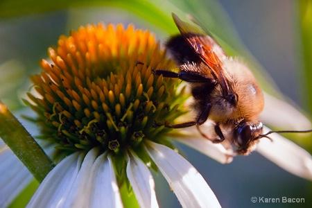 buzz,buzz