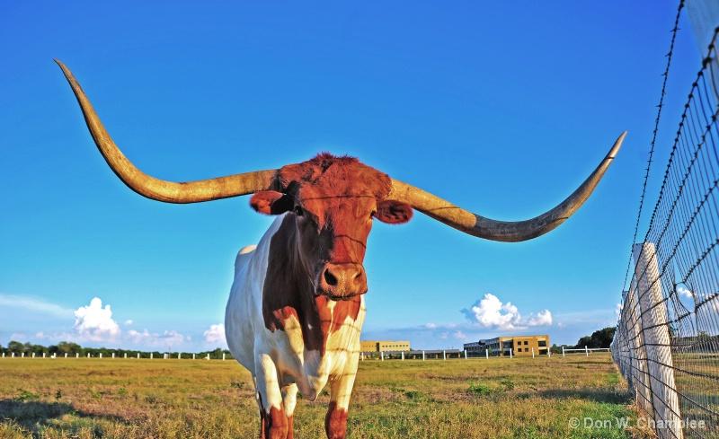If It's Longhorn, it Must Be Texas