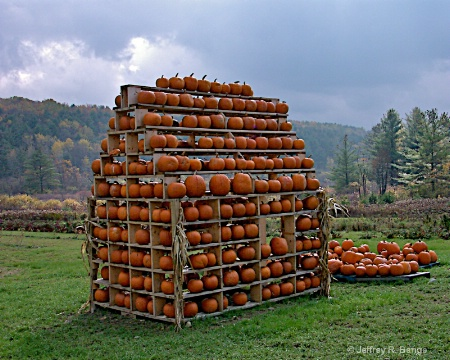 """House Of Pumpkins"""