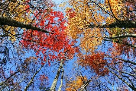 Fall Fantasy