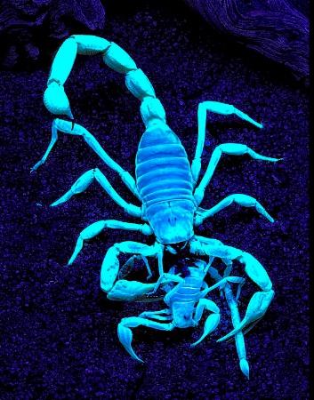 It's A Scorpion Eat Scorpion World!