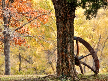 A Tree, A Wheel And Some Autumn Color