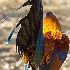 © Zita A. Strother PhotoID# 12833892: Cock Tail