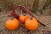Pumpkins and Plow