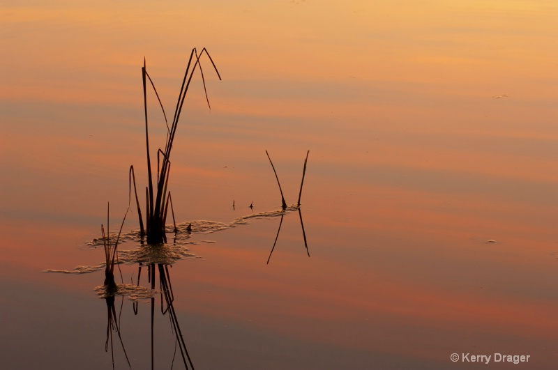 Pond Reeds at Sunset 1