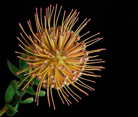 Floral Pincushion
