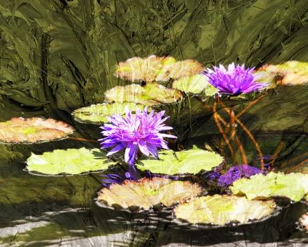 ~Jazz Pond Lily's~