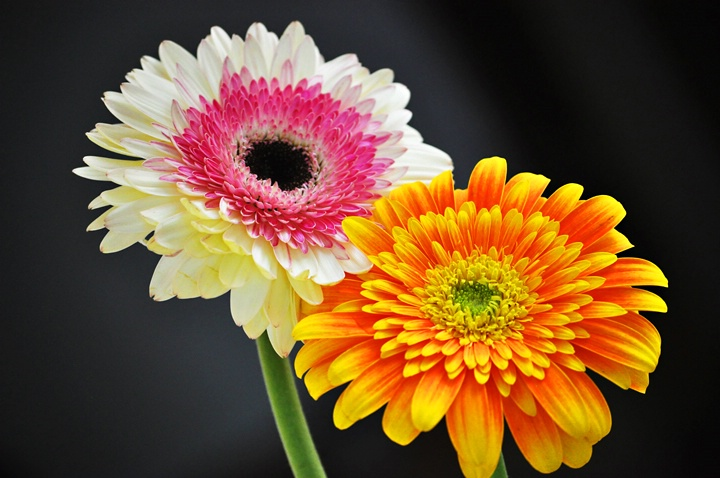 Online photo courses for anyone who loves picture taking for What makes flowers different colors