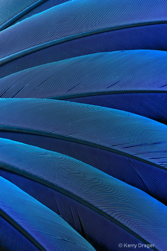 Feather Pattern - Blue 1